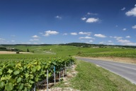Hautvillers viewed through the vineyards of Champagne, France