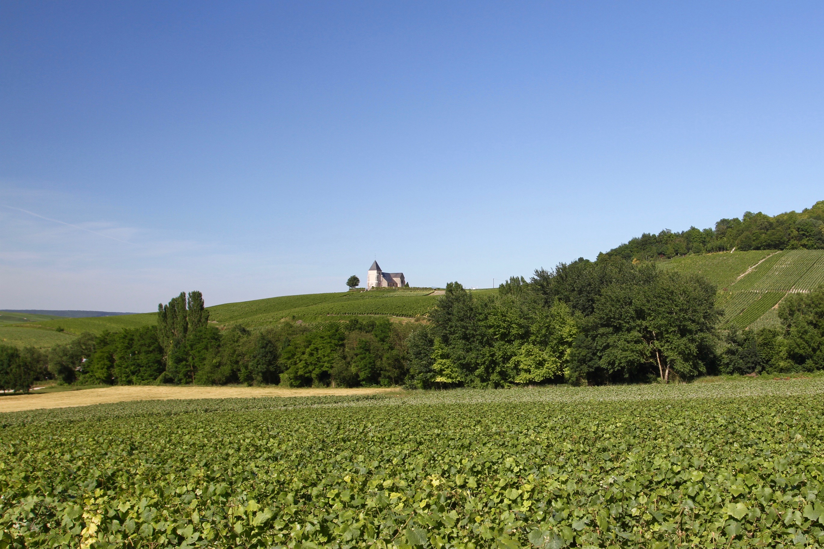 Vallee de la marne champagne route notesfromcamelidcountry for Champagne marne