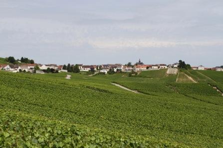 Cramant, Côte des Blancs Champagne Route, France