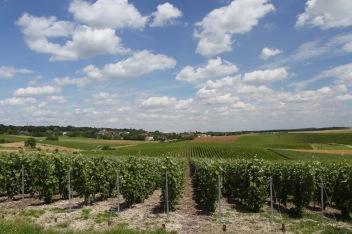 Vertus, Côte des Blancs Champagne Route, France