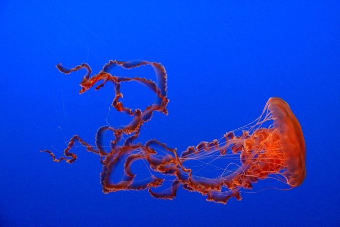 Aquarium, Monterey, California, USA