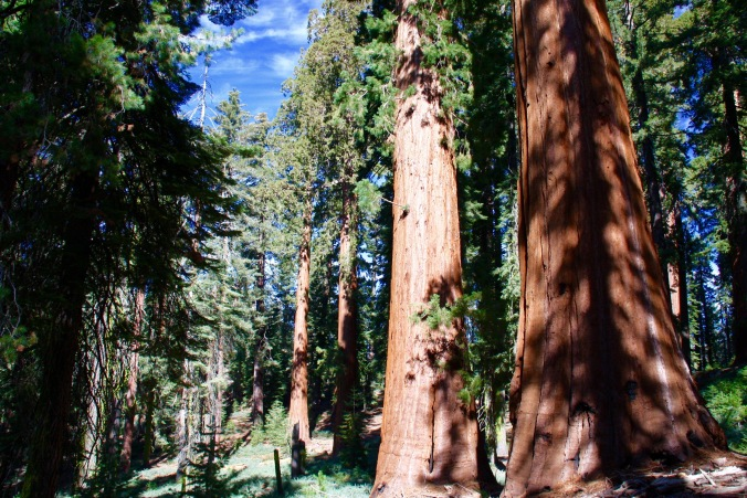 Mariposa Grove, Yosemite National Park, California, United States