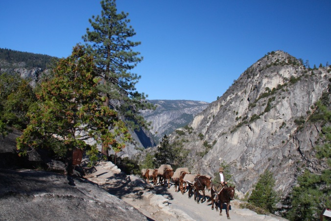 Horses on the John Muir trail, Yosemite, California, United States
