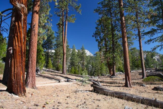 Little Yosemite Valley, Yosemite National Park, California, United States