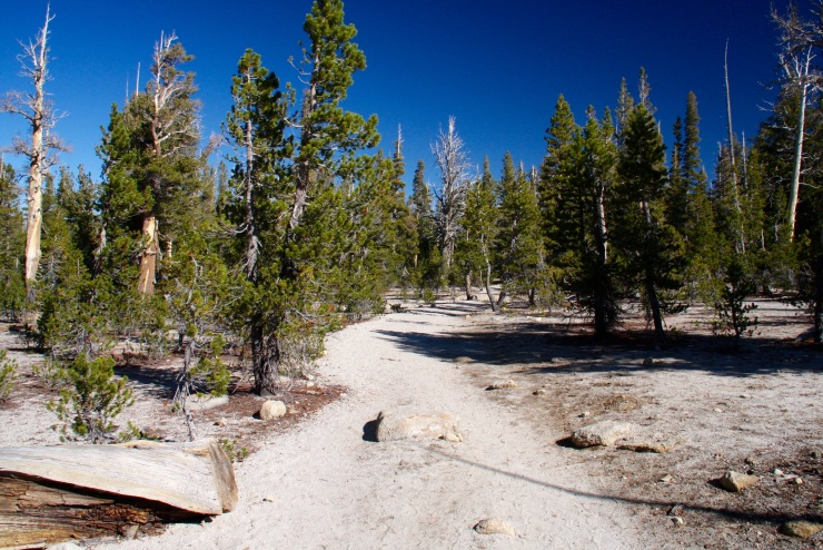 The trail to the Catherdal Lakes, Yosemite, California, United States