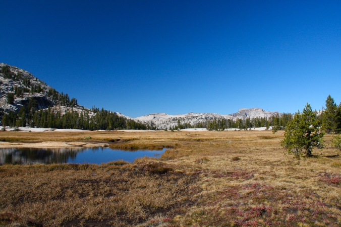Meadows at Cathedral Lakes, Yosemite, California, United States