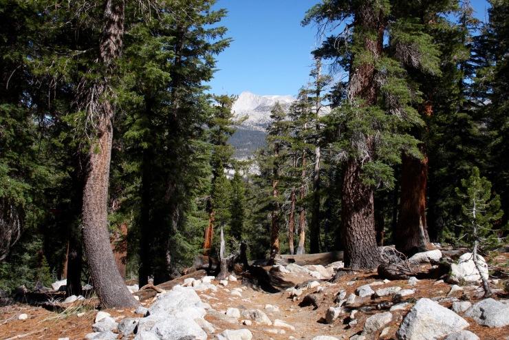 Trail to Catherdal Lake, Yosemite National Park, California, United States