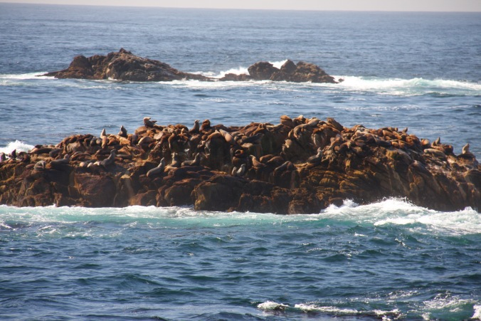 Sea lions, Point Lobos State Natural Reserve, California, United States