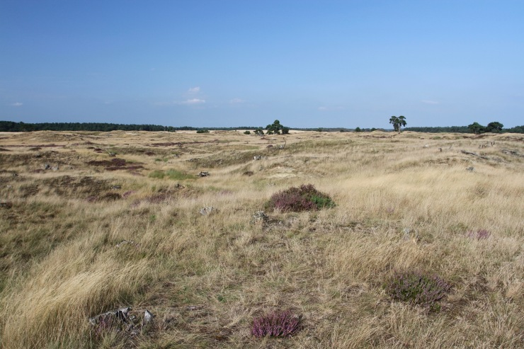 Hoge Veluwe National Park, Otterlo, Netherlands