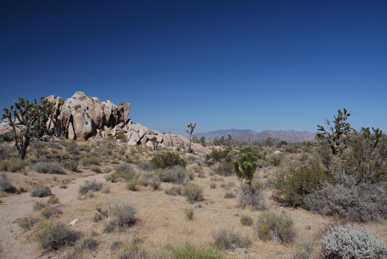 Mojave (CA) United States  city images : Mojave National Preserve, California, United States