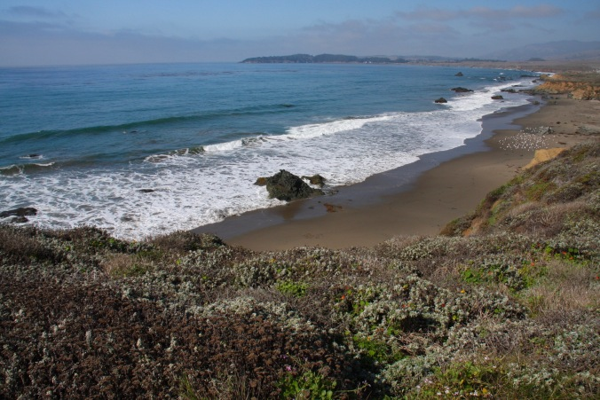 Wild beach, Pacific Coast, California, United States