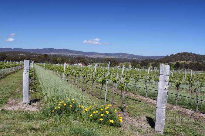 Vineyards, Ballandean, Queensland, Australia