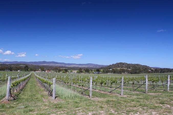 Vineyards, Granite Belt, Queensland, Australia