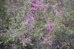 Wildflowers, Girraween National Park, Queensland, Australia