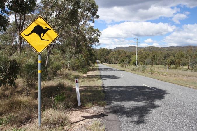 Kangaroo road sign, Queensland, Australia