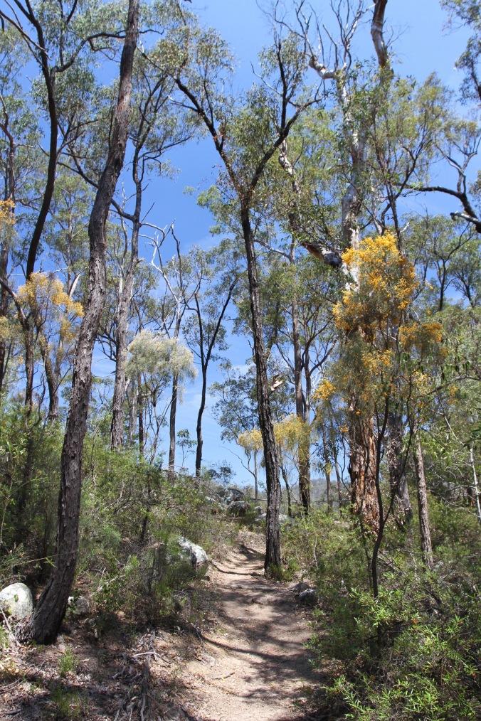 Crows Nest National Park, Queensland, Australia