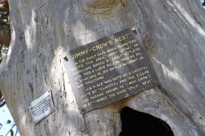 Jimmy Crow tree, Crows Nest, Queensland, Australia