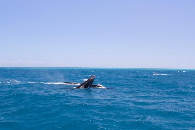 Whale watching, Queensland, Australia