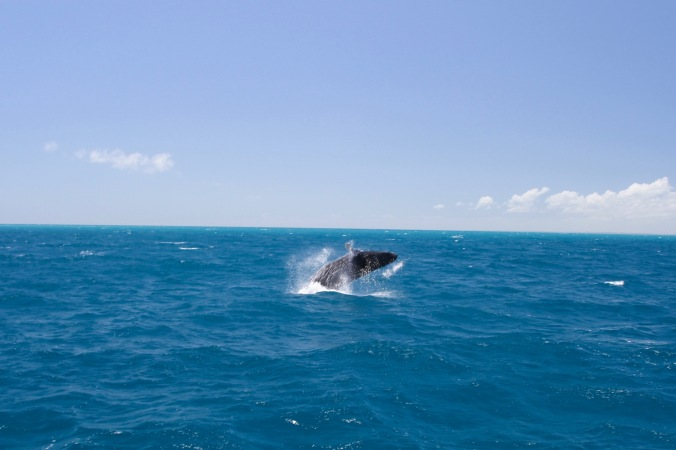 Whale watching, Queensland, Australia