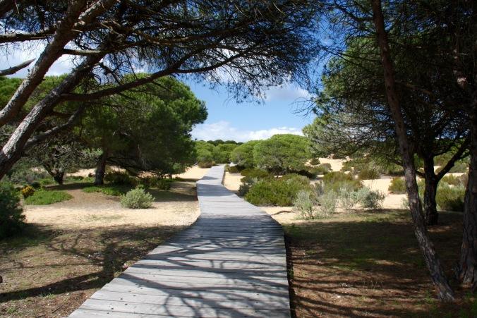 Acantilado del Asperillo, Parque Nacional de Doñana, Andalusia, Spain