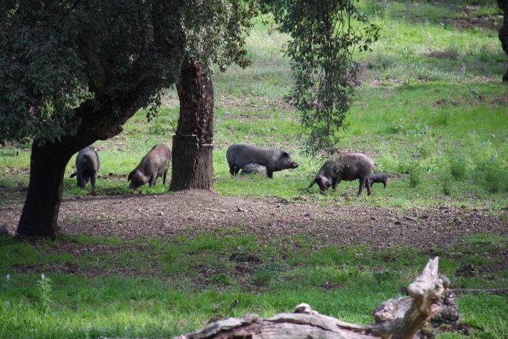 Aracena, Andalusia, Spain