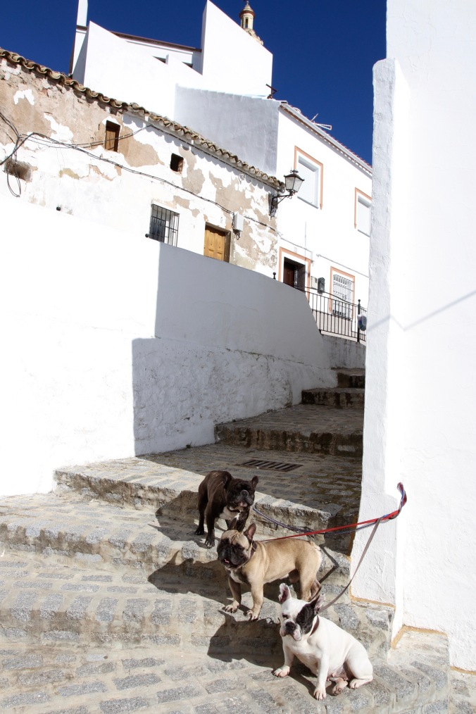 Mad dogs and an Englishman, Olvera, Andalusia, Spain