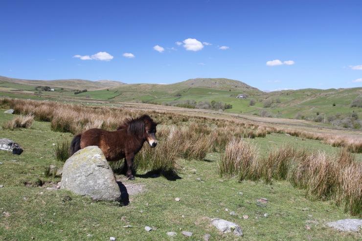 Landscape near Swinside Stone Circle, Millom, Cumbria