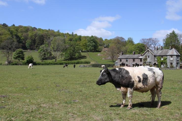 Grasmere village, Lake District National Park, Cumbria