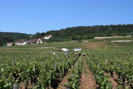 Route des Grand Crus, Cote de Nuits, Burgundy, France