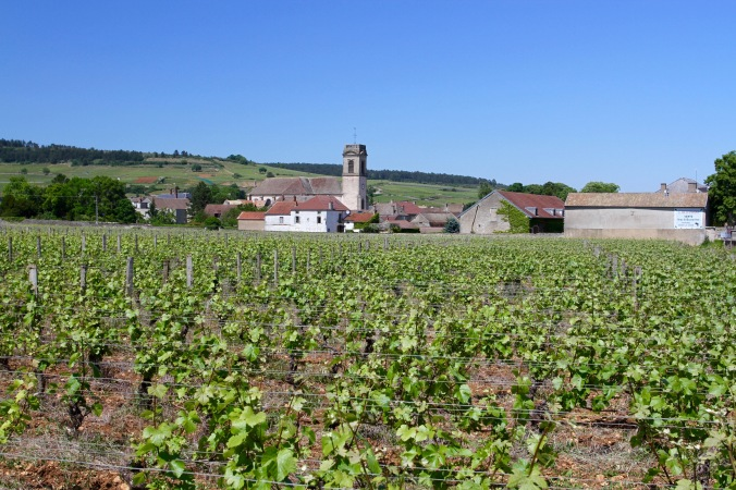 Pommard, Route des Grand Crus, Cote de Beaune, Burgundy, France