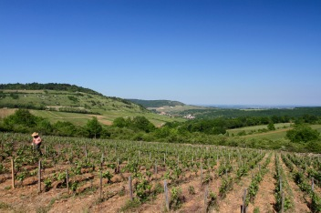 Route des Grand Crus, Cote de Beaune, Burgundy, France