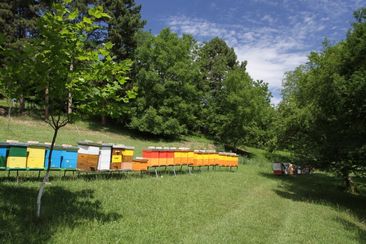Beehives, Fruska Gora National Park, Serbia