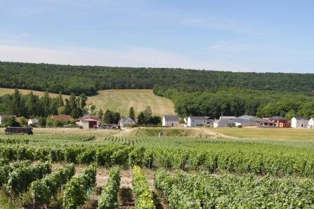 Courmas, Montagne de Reims Champagne Route, Champagne, France