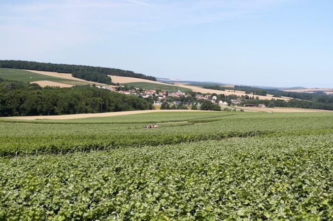 Montagne de Reims Champagne Route, Champagne, France