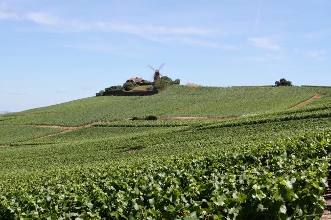 Verzenay, Montagne de Reims Champagne Route, Champagne, France