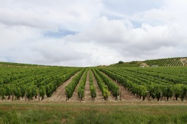 Vineyards, Chablis, Burgundy, France