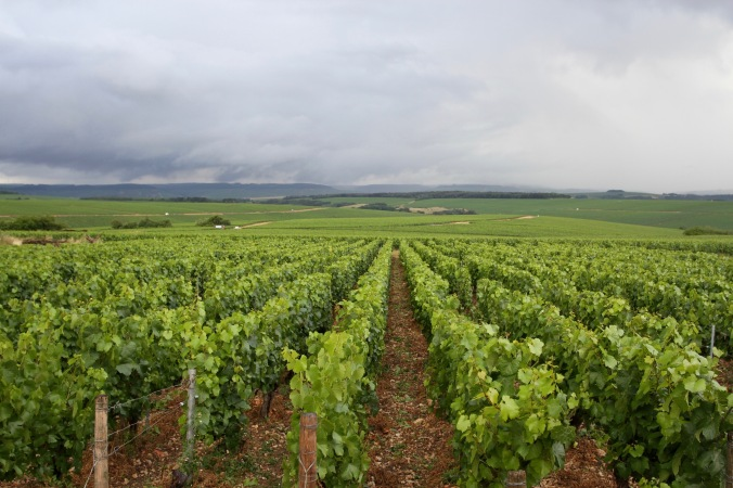 Vineyards near Chablis, Burgundy, France