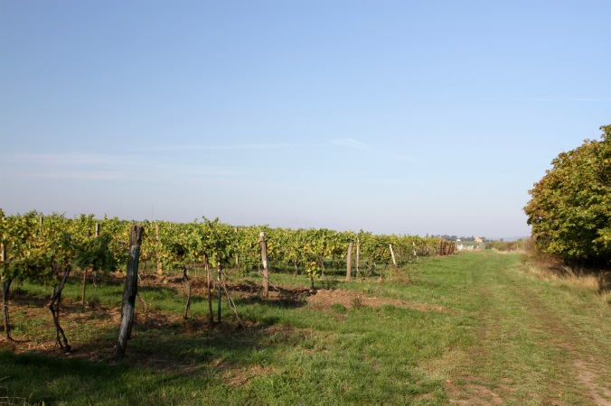 Vineyards near Valtice, Moravia, Czech Republic