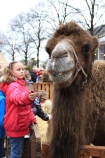 Nativity at Dordrecht Xmas Market, Netherlands