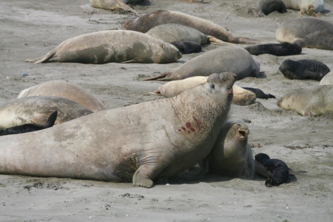 Seals, Patagonia, Argentina