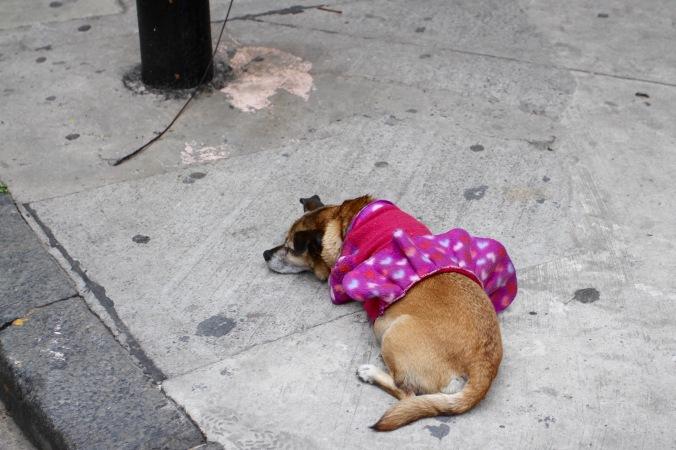 Tango dog, Abasto, Buenos Aires, Argentina