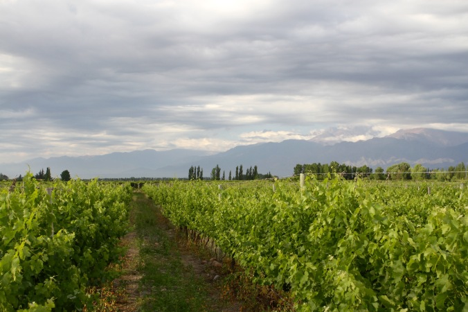 Vineyards, Valle de Uco, Mendoza, Argentina