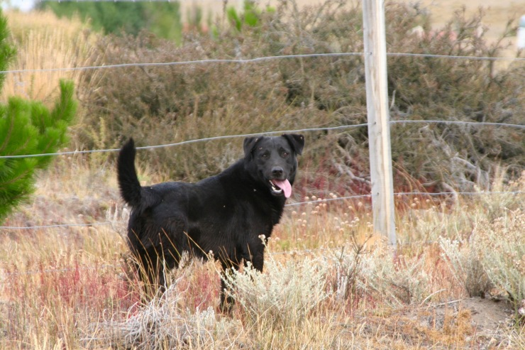 Friendly dog, Reserva Laguna Nimez, El Calafate, Argentina