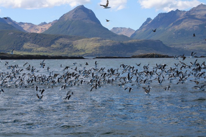 Sailing the Beagle Channel, Tierra del Fuego, Argentina