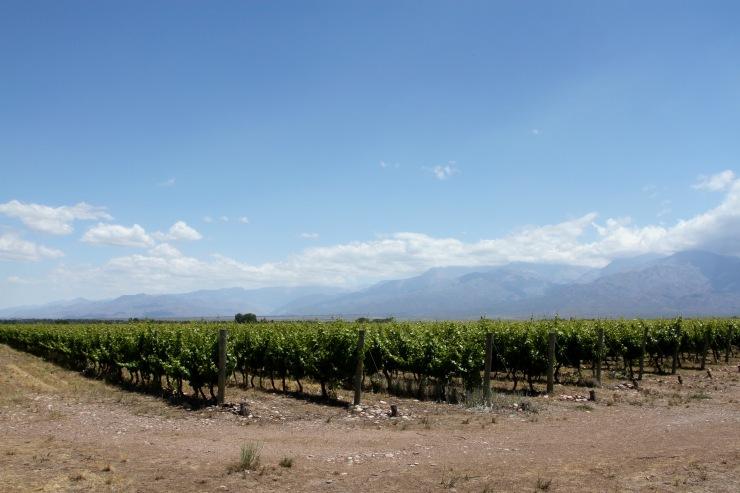 Valle de Uco, Mendoza, Argentina