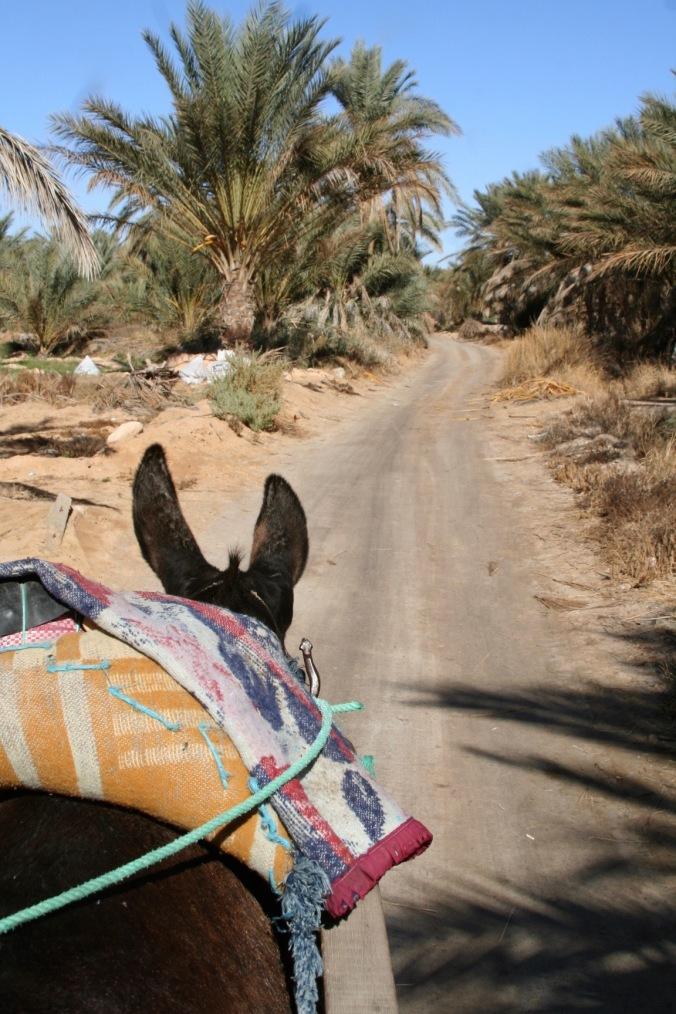 Donkey cart taxi, Douz, Tunisia