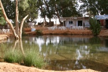 Oasis of Ksar Ghilane, Grand Erg Oriental, Tunisia