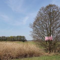 Protest tree, Spreewald, Germany