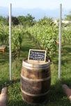 Wine Tasting in Kakheti region, Georgia