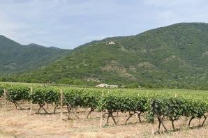 Vineyards with Nekresi Monastery in background, Kakheti, Georgia